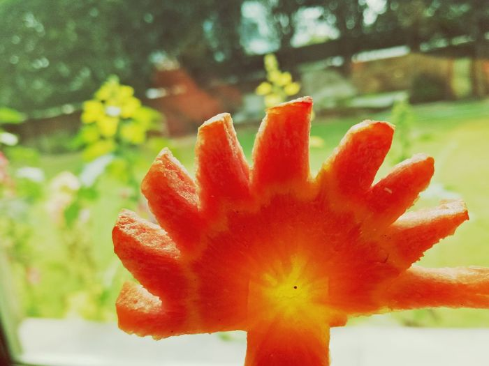 carrot Carrots Design Timepass Beauty In Nature Flower Head Outdoors Red Springtime No People Fragility Growth EyeEmNewHere The Photojournalist - 2018 EyeEm Awards The Creative - 2018 EyeEm Awards The Great Outdoors - 2018 EyeEm Awards 10 The Still Life Photographer - 2018 EyeEm Awards