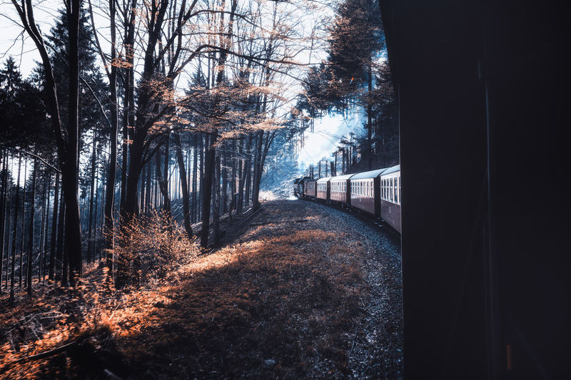 View of train in forest during winter