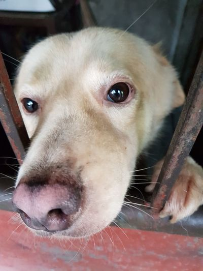 EyeEm Selects Retriever Young Animal Portrait Domestic Animals Dog Pets Looking At Camera No People One Animal Day Close-up Take Me With You I Love You Please Stay Dont Leave Me