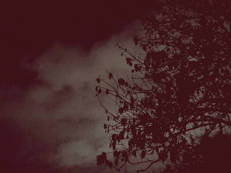 Sky Low Angle View Tree No People Nature Plant Night Beauty In Nature Cloud - Sky Branch Outdoors Silhouette