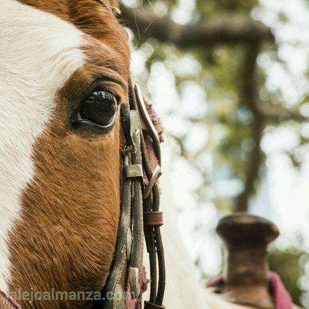 horse at the Williams Towet Horse Houston Houston Rodeo