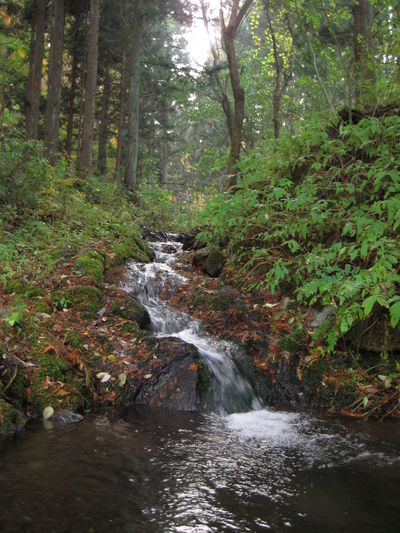Countryside Iwate Japan Riverscape Tohoku Tono Water 岩手 東北 遠野 Trees