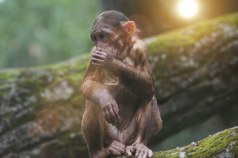 Monkey sitting outdoors