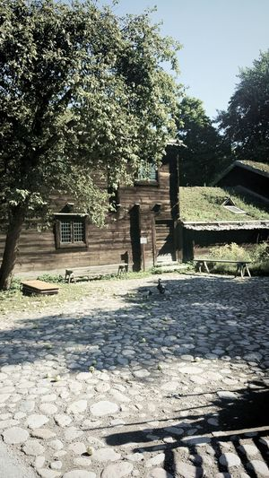 Built Structure Building Exterior Architecture Tree House Rural Scene Sunny Day Cottage Skansen Skansen Stockholm Outdoor Museum Footpath Residential Structure