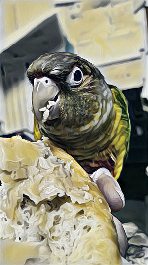 LuceyParrots Of Eyeem Donuts🍩 Donuts❤❤❤❤👌👌 Bird Photography Birds🐦⛅ Donuts Crazy Animals  Animal_collection Donuts! Animal Photography Pet Photography  Artistic Abstract Birds_collection Parrot Love Donut Time Eating Donuts Eating One Animal Birds Of EyeEm  Petslife Birds Lover Animal Themes Animallovers Abstract Photography