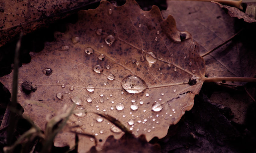 Brown leaf macro with details Abstract Abstract Photography Background Backgrounds Brown Design Details Leaf Macro Macro Photography Nature Nature Photography Pattern Raindrops Structure Surface Texture Texture# Textured  Textures And Surfaces Vintage Waterdrops Wood Wood - Material WoodLand