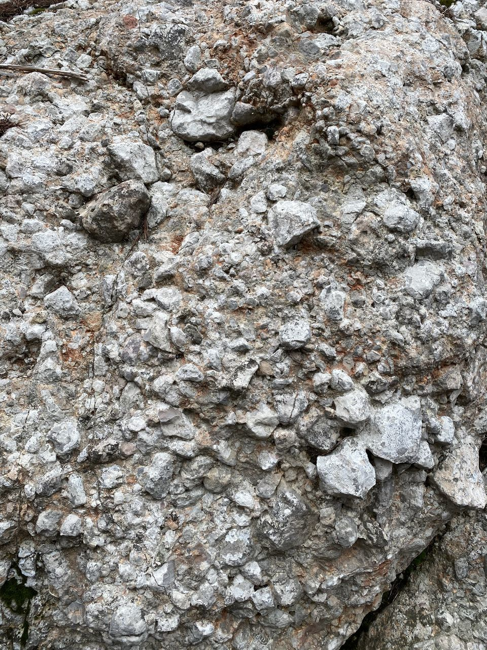 rock, solid, close-up, rock - object, backgrounds, full frame, no people, textured, nature, day, natural pattern, outdoors, representation, animal, rough, gray, pattern, tree, tree trunk, animal themes, marine