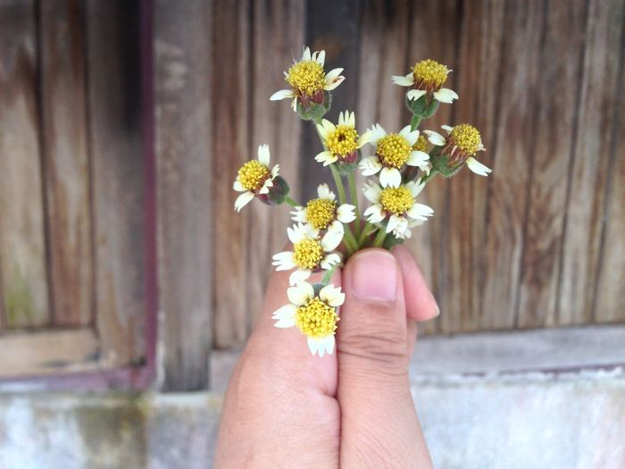 Beauty In Nature Body Part Close-up Day Finger Flower Flower Head Flowering Plant Focus On Foreground Fragility Freshness Hand Holding Human Body Part Human Hand Human Limb One Person Outdoors Personal Perspective Petal Plant Pollen Real People Vulnerability