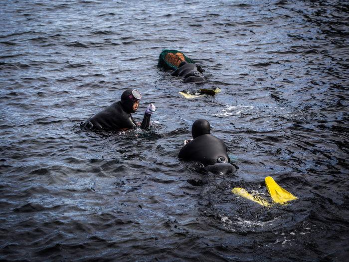 Diving Jeju
