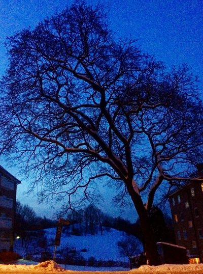 Om Morgenen Vinter Oslo Every Morning Winter Oslo Norway Trees Nature Snø Snow Twilight Magical Norge Norway ✌ Blue Wave