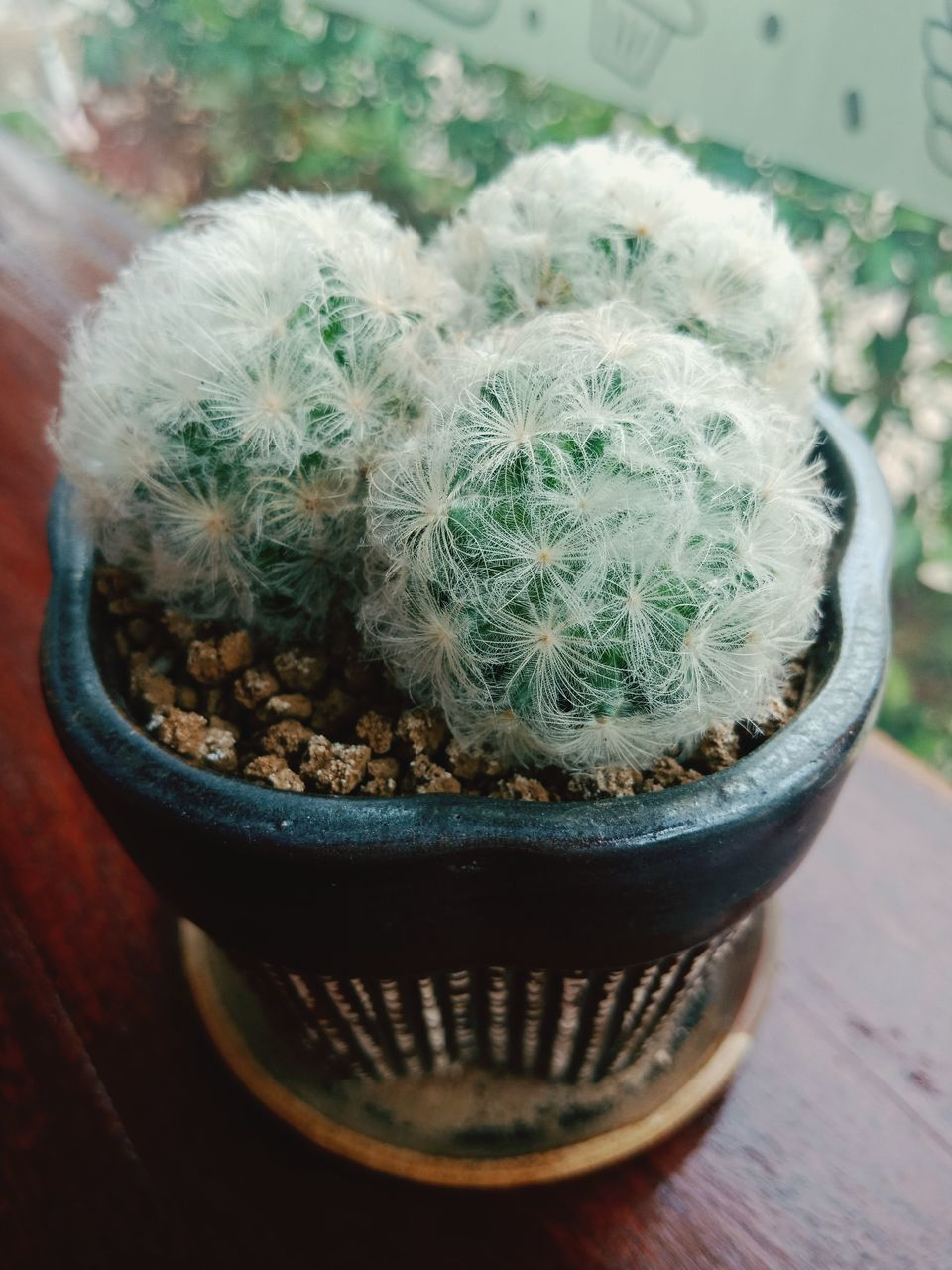 potted plant, plant, succulent plant, no people, growth, cactus, close-up, high angle view, nature, flower pot, focus on foreground, day, thorn, pot, indoors, beauty in nature, table, green color, container, freshness, houseplant