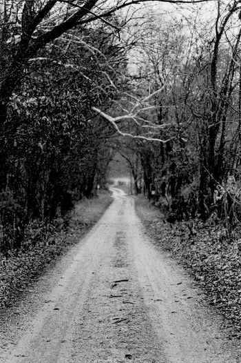Day Forest Nature No People Outdoors Road The Way Forward Tree Black And White Friday