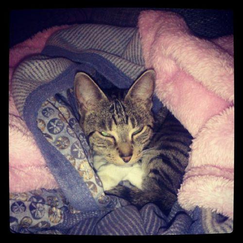Decke Beschlagnahmt Katz Cat rosa weich flauschig kuscheln kuscheldecken