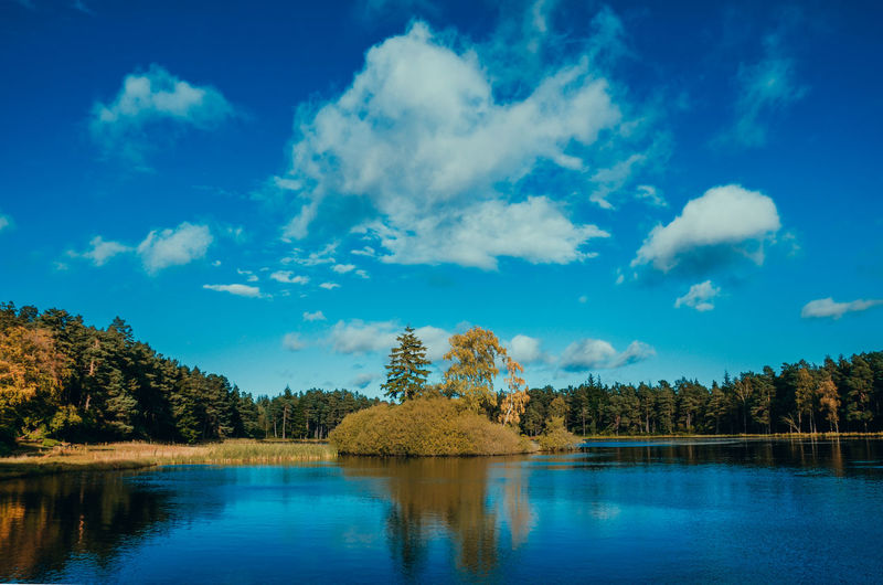 Tree Reflection Blue Cloud - Sky Water Pinaceae Pine Tree Outdoors Sky No People Lake Nature Day Beauty In Nature Lost In The Landscape