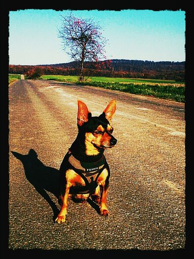 King of the Road :-) enjoying the sun sunbathing walking around