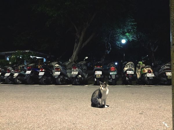 認養代替購買 Cute Cat Cute Pets