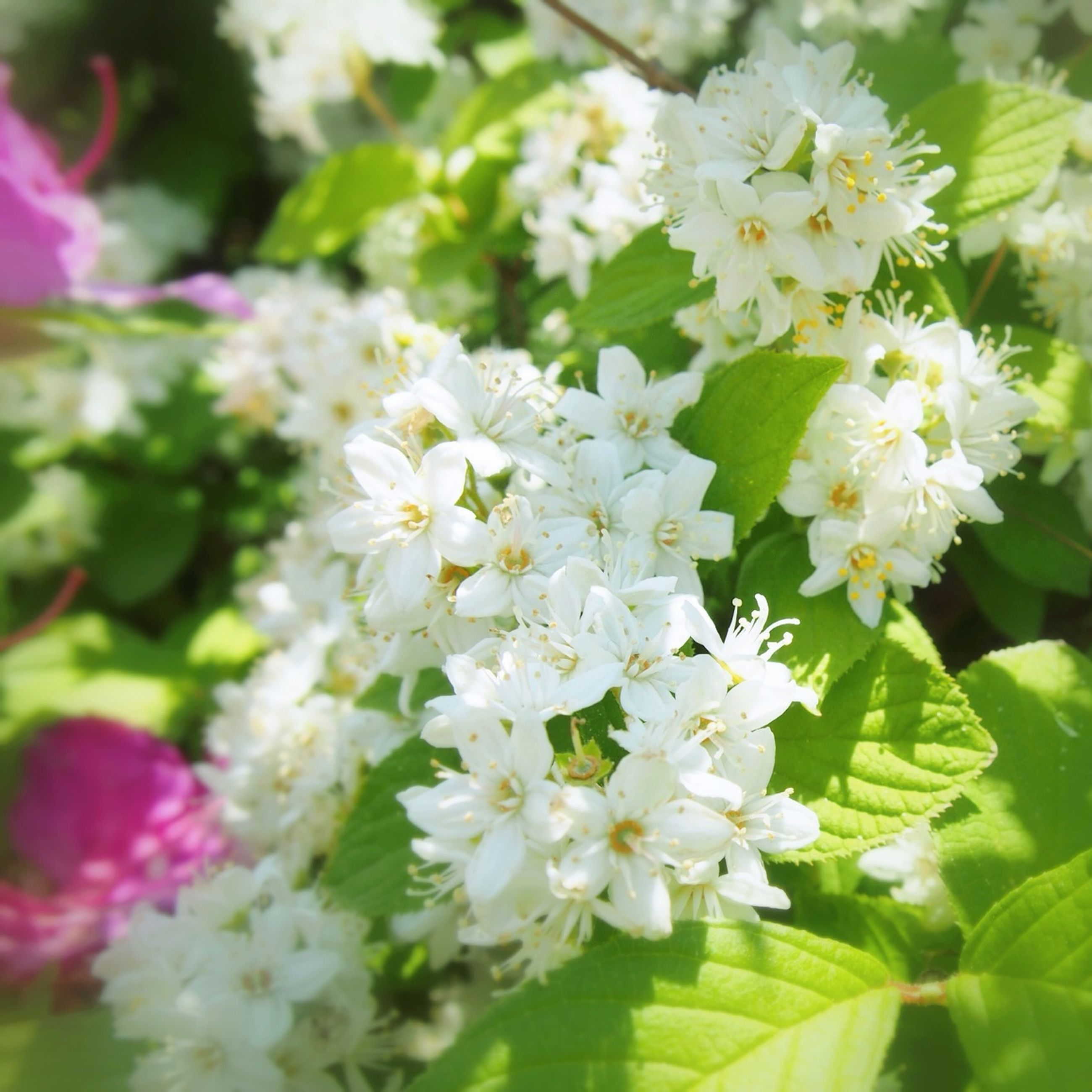 flower, freshness, fragility, growth, petal, beauty in nature, white color, flower head, focus on foreground, nature, blooming, close-up, plant, leaf, in bloom, blossom, park - man made space, outdoors, day, no people
