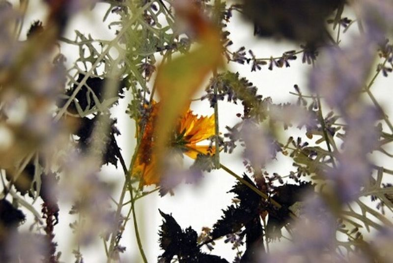 ?Make It Yourself Taking Photos Fotography Eyem Best Shots Eyem Nature Lovers  ?? Minimalism Flowers ? Arte Artesanato ?