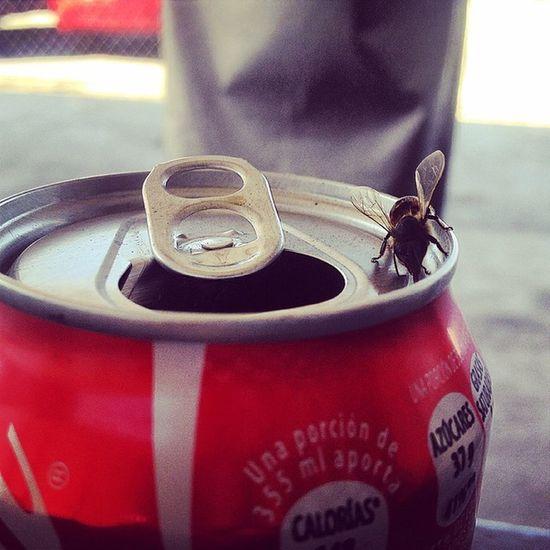 Maldita ladrona Aveja Cocacola Lata Rojo Mepica Ladrona Maldita Monterrey Mexico