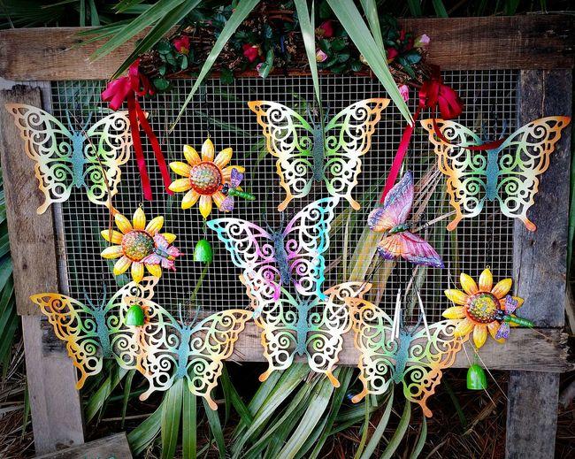 Check This Out Beautiful butterflies at Renaissance Fair Artwork Melbourne FL