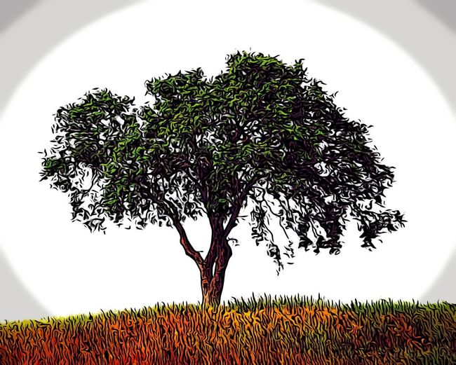 Fraction style of original fine art photo Plant Tree Growth Sky No People Nature Landscape Environment Food And Drink Beauty In Nature Land Field Grass Tranquility Rural Scene Outdoors Silhouette Branch Food Green Color