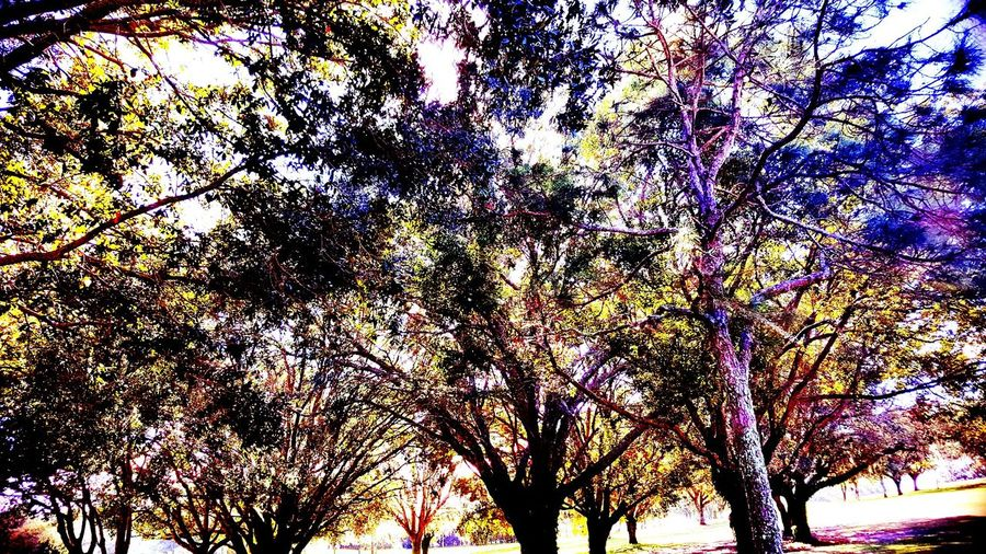 Tree Low Angle View Growth Nature No People Triksaphotography Greatphotosofeyeem Backgrounds Beauty In Nature Branch Purpleleaves Tranquility Scenics Happytobealive Golfcoursesofeyeem Nofilterneeded Just Amazing Sunthrutrees Outdoors Sky Illuminated Beauty In Nature NoEditNoFilter Beauty In Ordinary Things Morninginflorida