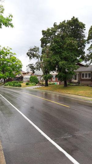 🌧 Sky Windy Street Tree Pluie Pluie D'été