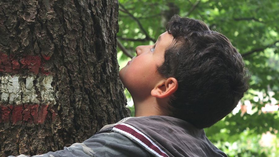 Close-up of boy hugging tree at forest