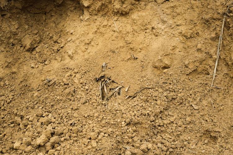 Mud Sand Land