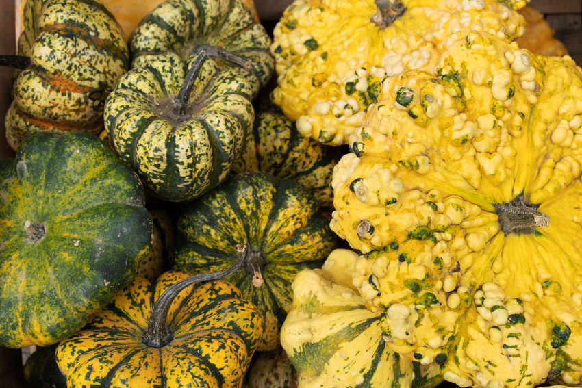 Food Food And Drink Freshness Healthy Eating Yellow Retail  Close-up Wellbeing Vegetable Full Frame Market No People Flower Large Group Of Objects Pumpkin Abundance Squash - Vegetable Day Backgrounds Plant Organic Outdoors Ripe Pumpkins Healthy Lifestyle