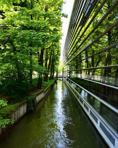 Green Color Streelife Street Photography Lovecity  Beauty Nature Photography Plants And Flowers Green München Architecture Architecturephotography Dnsphotography 2 Nikonphotography
