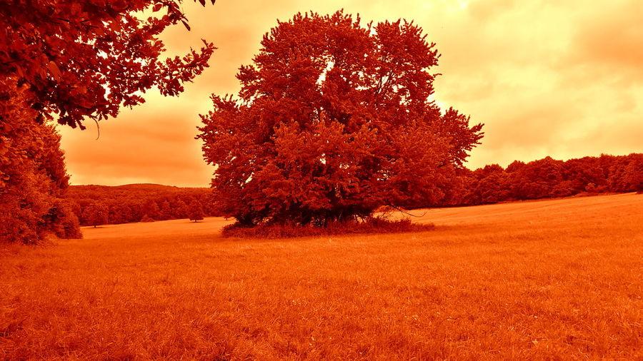 Beauty In Nature Cloud Cloud - Sky Field Grass Male Karpaty Nature Orange Color Rural Scene Season  Sky Tree