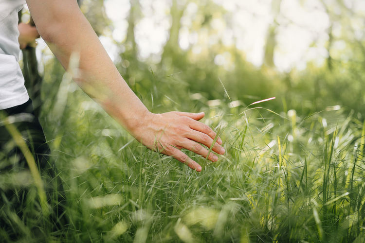 Close-up of hand touching tall grass on field