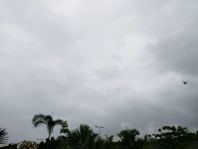 Monsoon is coming Monsoon Rain Time Waiting To Start Work Hanging Out Taking Photos Check This Out Clouds And Sky Windy Rainy Weather Rainy Morning Soothing To The Soul Soothing Winds