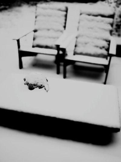 Snow Winter No