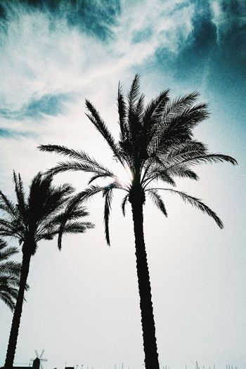 Single Tree Tree Sky Low Angle View Outdoors Beauty In Nature Palm Tree Nature Ibiza Silhouette First Eyeem Photo The Week On EyeEm