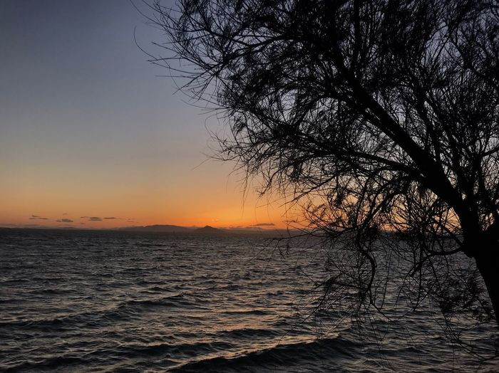 Sunset tree Sky Sunset Beauty In Nature Water Scenics - Nature Tree Tranquility Sea Nature Idyllic Silhouette Plant Horizon Outdoors Orange Color Clear Sky
