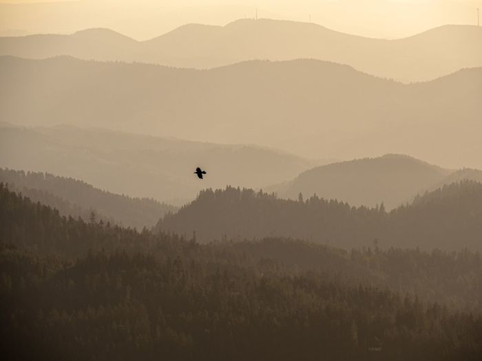 Silhouette bird on mountain against sky during sunset