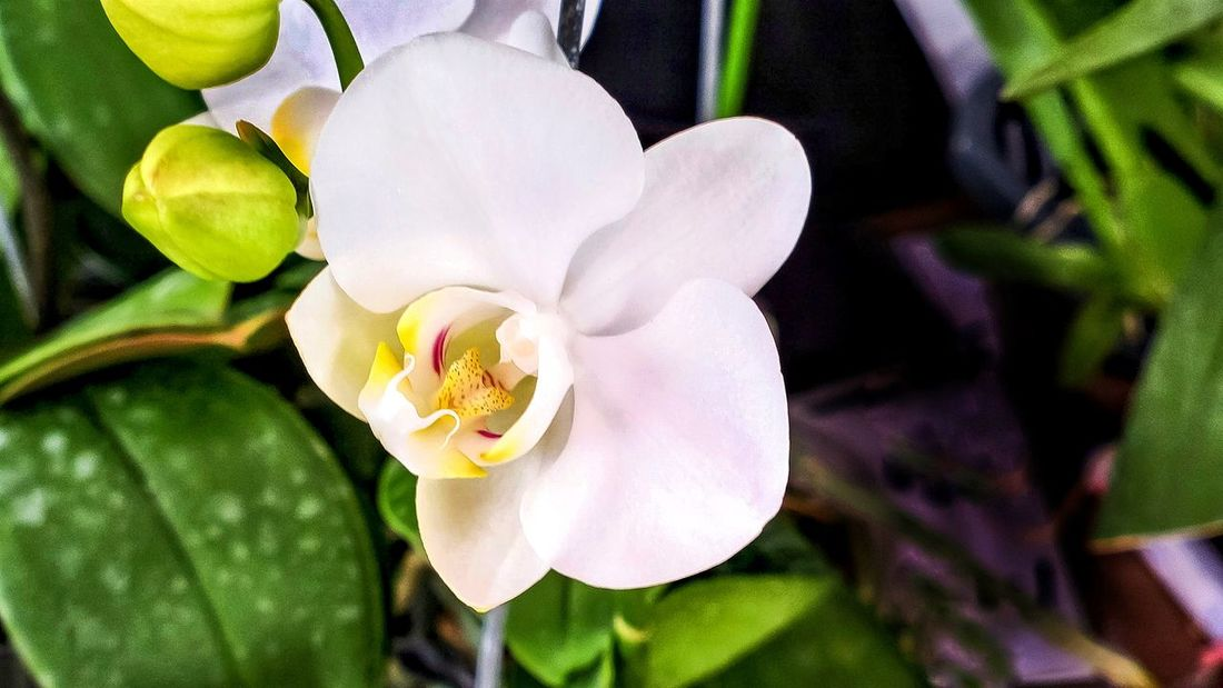 Orchid White Vibrant Petal Nature Beauty In Nature Outdoors Close-up Freshness Leaf Green Nature Exposition Florale