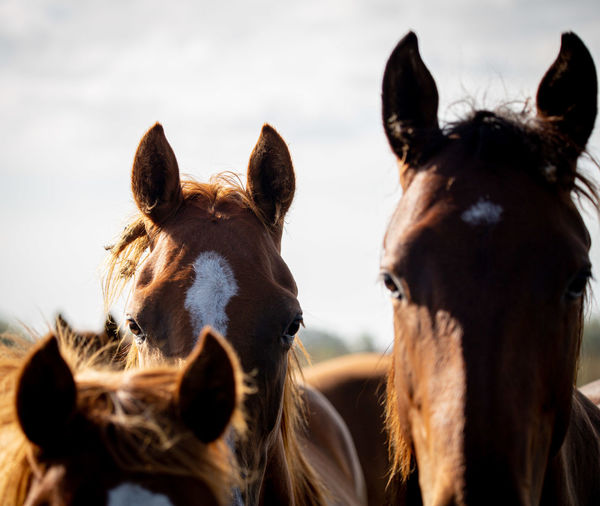 Close-up of two horses