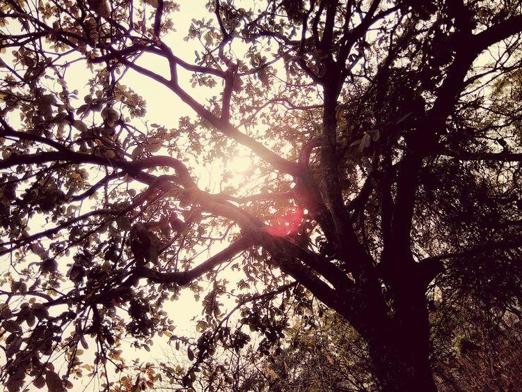 Pastel Power Spring EyeEm Trees Shadow Sun Sunrise Sunshine @sekharchinta, Hyderabad India