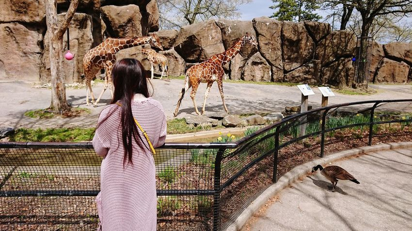 Giraffe Zoo Giraffes Philadelphia Zoo Wife Wifey♡ Working Tree Women Llama Alpaca Chile South America Herbivorous Livestock Tag Grazing Domestic Cattle Bridle Peru Bolivia Cage Birdcage Pigeon Seagull Perching Horse Under Livestock Sparrow