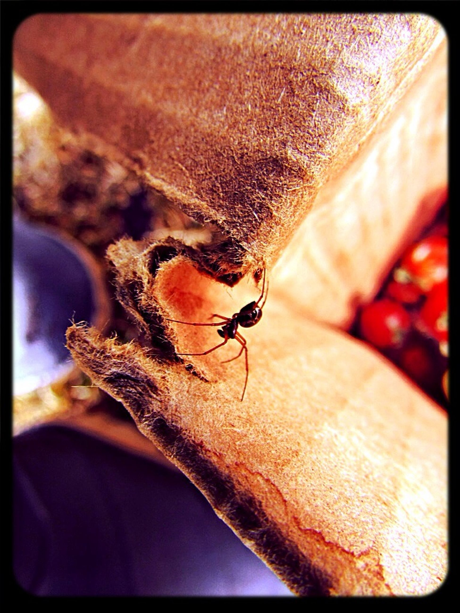 animal themes, one animal, insect, animals in the wild, wildlife, transfer print, close-up, auto post production filter, focus on foreground, selective focus, zoology, indoors, day, nature, no people, brown, animal antenna, animal head