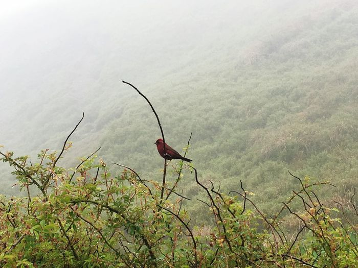 Red in Green, standing in the Wind Animals In The Wild Animal Bird Plant Growth Beauty In Nature Tranquility Nature Tree No People Scenics - Nature Tranquil Scene Mountain Outdoors Green Color Field First Eyeem Photo