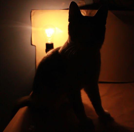Burning Cat
