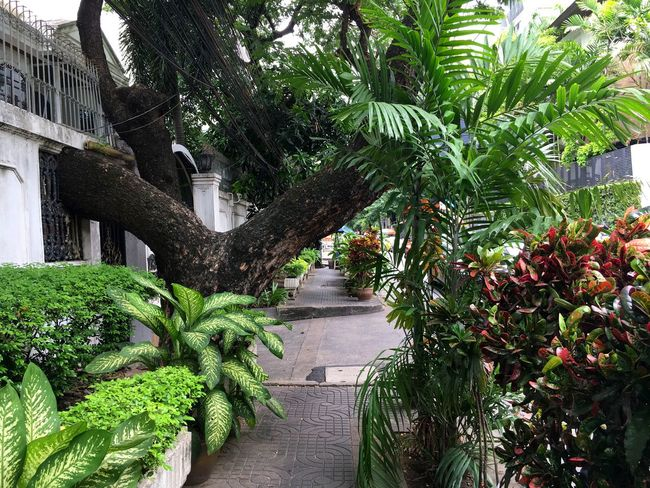Green Plant Green Color Day Nature Beauty In Nature Jelee Colourfullife Colorfulbangkok Footpath Residential Structure Green Bangkok