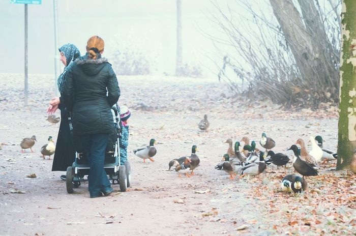 This is really one of my dearest shots this year ☺ it was a very foggy day Foggy Day My Year My View In The Park Ducks Feeding Friendship Three Persons Generations Telling Stories Differently Grandmother And Child Daughter And Mother Baby Stroller My Point Of View Fog In The Trees Eye4photography  Cold Days EyeEm Gallery Foggy Weather Northgermany Scenery_collection Tranquil Scene Nature Scenics Rear View Animal Themes People And Places