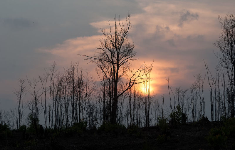 Trees on landscape against sky at sunset