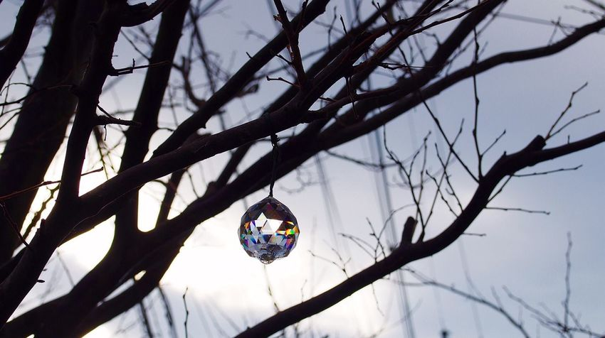 Cold Morning EyeEm Best Edits SunCatcher  Crystal Taking Photos From My Point Of View キラキラ Garden Photography 寒い寒い…なんちゅーまー( -᷄◞ω◟-᷅ )))💦