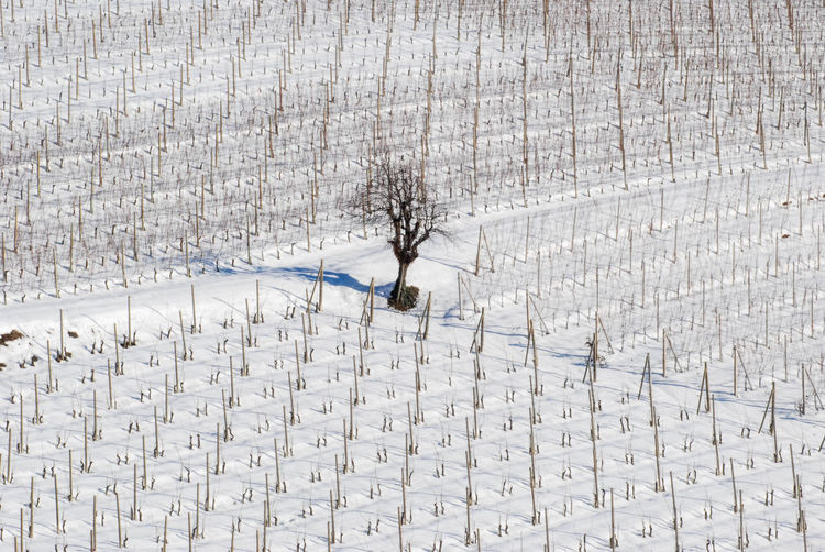 Alba Barolo Countryside Hills Italy Land Landscape Landscapes Langa Langhe Natural Nature Nebbiolo No People Non-urban Scene Piedmont Piedmont Italy Rural Scene Snow Tourist Resort Vineyard Viticulture Wine Winery
